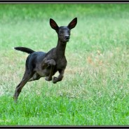 Pictures of very rare black fawn